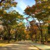 毛馬桜ノ宮講演の紅葉
