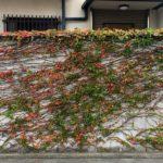 梅田のど真ん中の秋