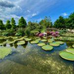 水生植物公園みずの森のオニバス