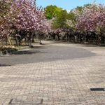造幣局の桜、外から